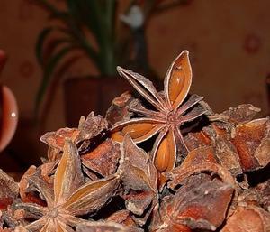 Anisum stellatum (Бадьян)