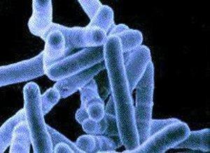 Bacillinum (Туберкулиновый нозод из гноя каверн)