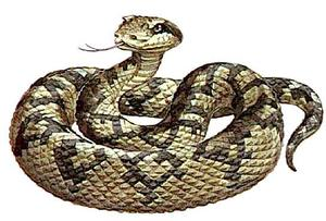 Lachesis mutus (Яд змеи Ляхезис мутус или Сурукуку, Бушмейстер)