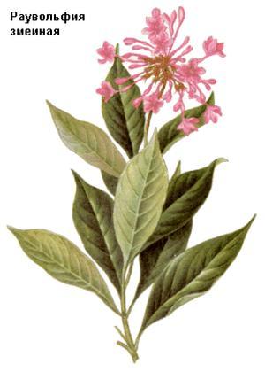 Rauwolfia serpentina (Раувольфия змеевидная)